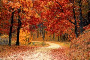 Allee mit Bäumen in Herbstfarben